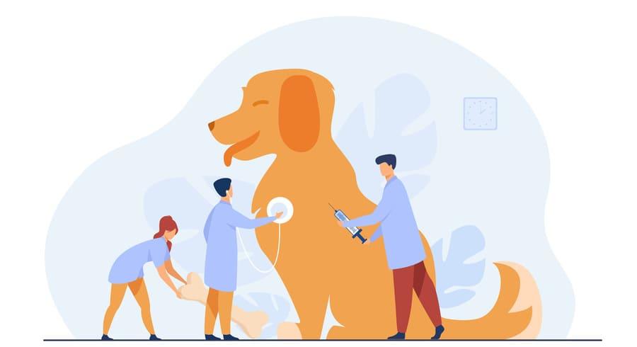 Изменения в ветеринарии в 2021 году
