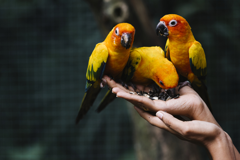 Болезни животных, передающиеся человеку при непосредственном контакте картинка